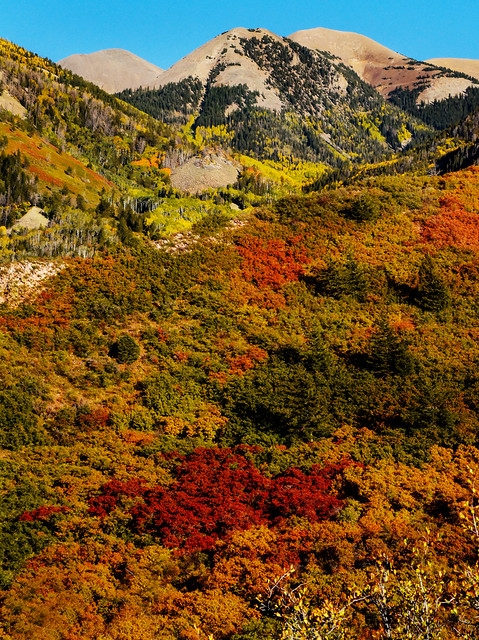 LaSal Mts Fall Colors