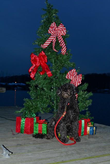 Christmas Tree on lLoating Doc DSC_3475 2 - JU