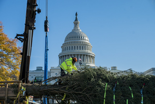 The Capitol Christmas tree arriving in Washington, DC