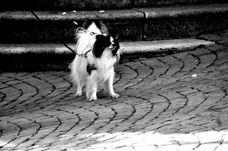 Dog 29.09 (1)