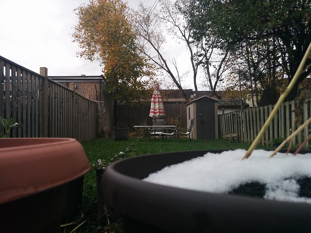 Backyard on the day after the first snowfall #toronto #dovercourtvillage #backyard #fall #autumn #snow