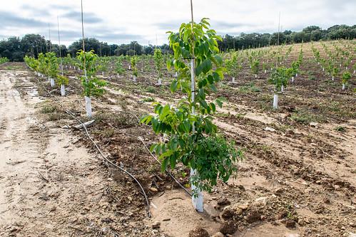 Otra vista de los plantaciones nuevas