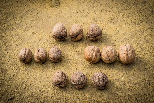 """Distintos tipos de las nueces de Ronda de """"La Molinilla"""""""