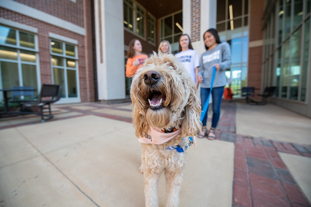 Daisy, a goldendoodle, with nursing students behind her