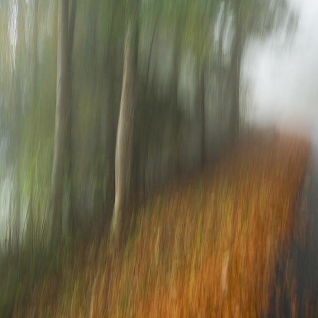 Strassen- und Waldrand