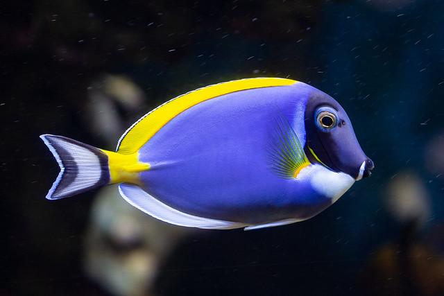 Naturfarben blau + gelb