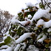 Bush After First Snowfall