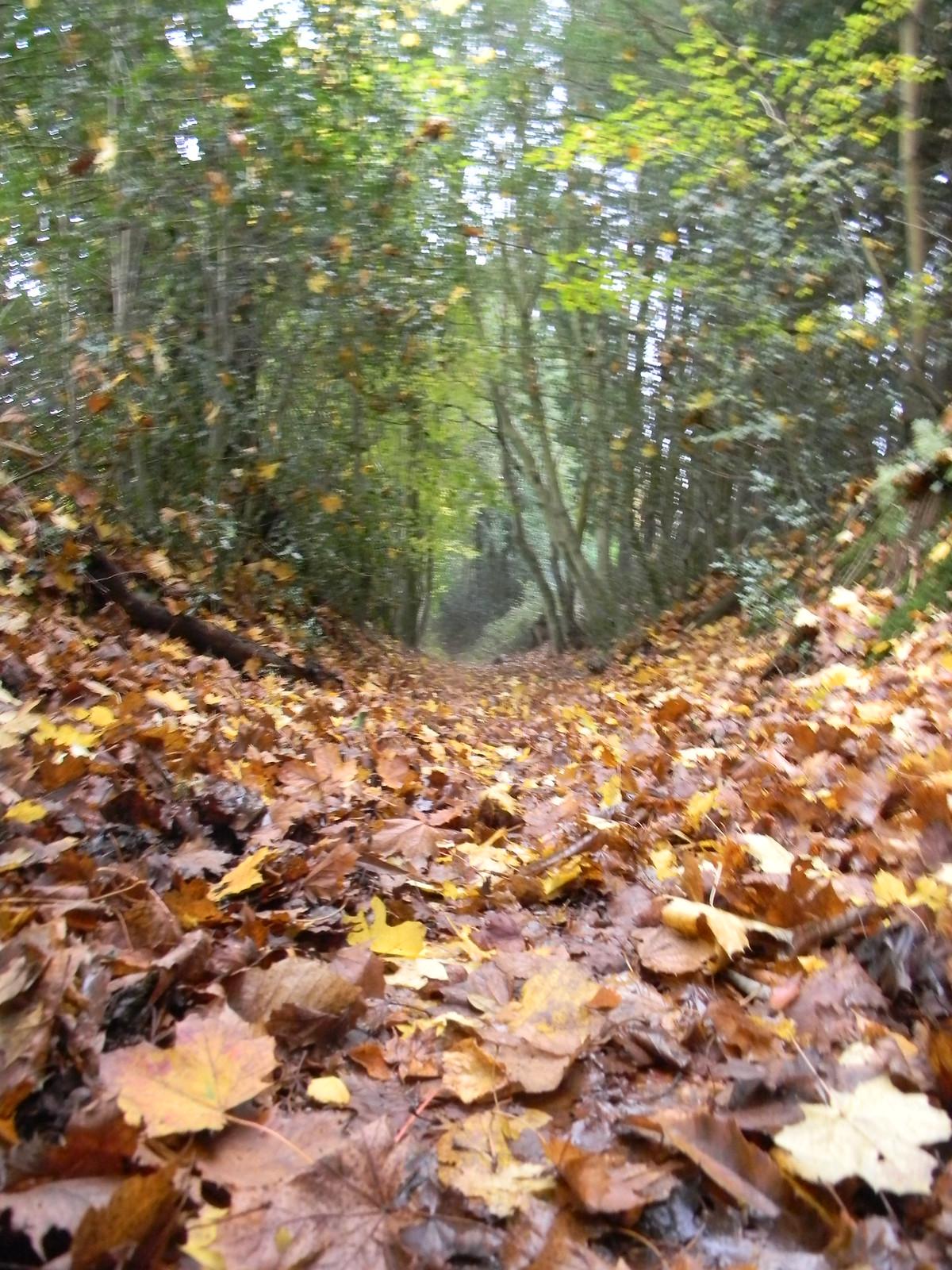 Leaves on the path Farnham to Godalming Wednesday Walk