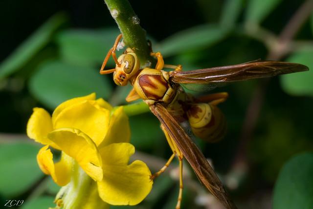 The hornet lives.
