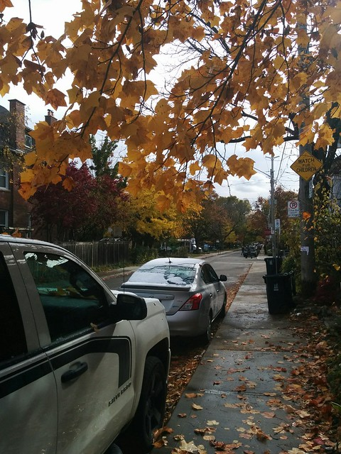 South on Palmerston #toronto #seatonvillage #palmerstonave #fall #autumn #yellow