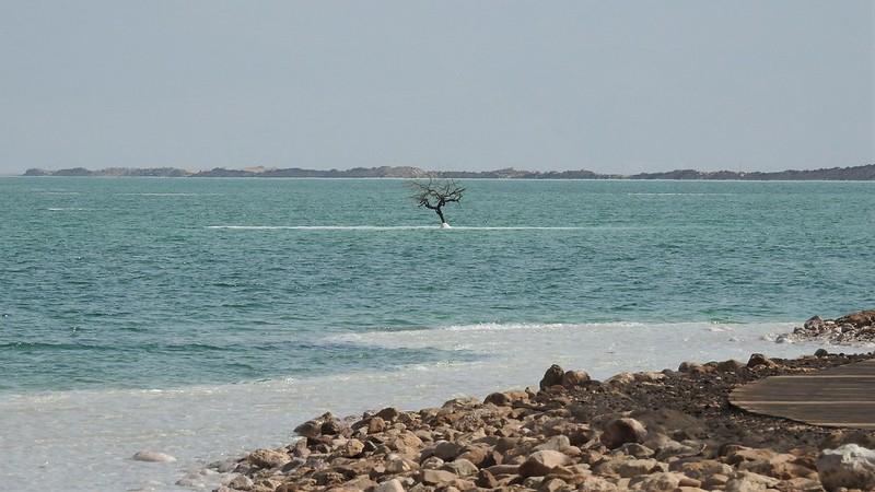 Одинокое дерево на острове из соли
