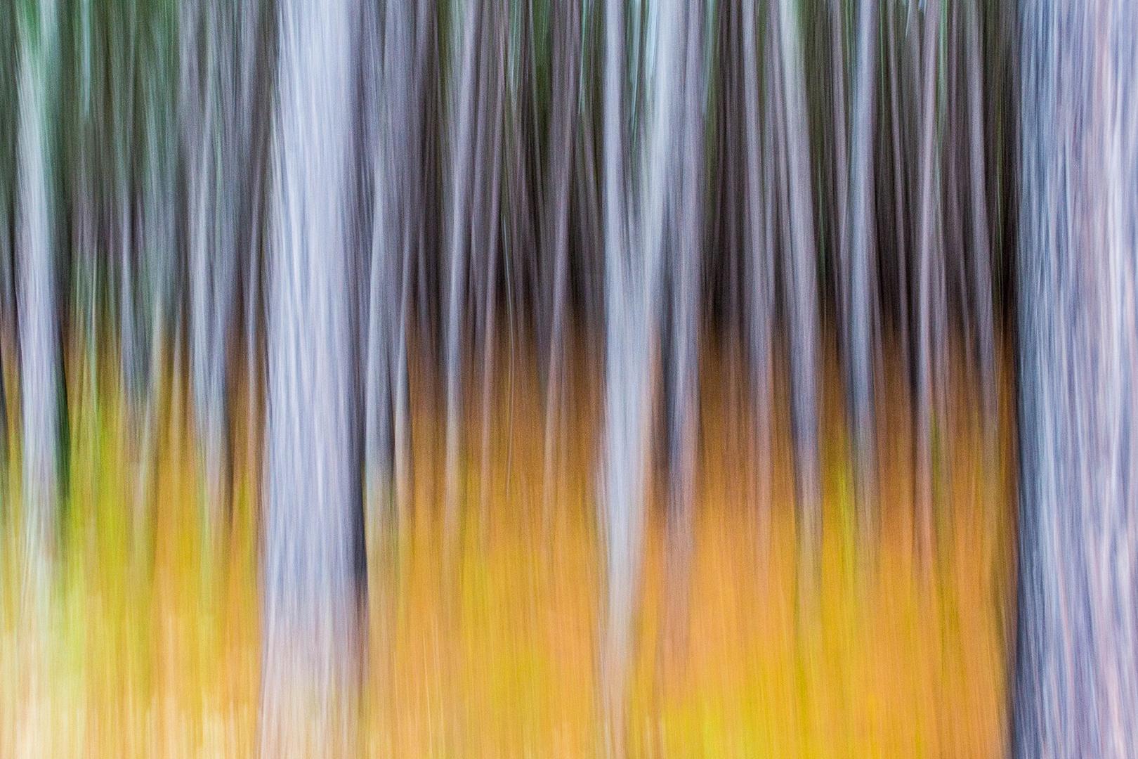 À l'orée du bois