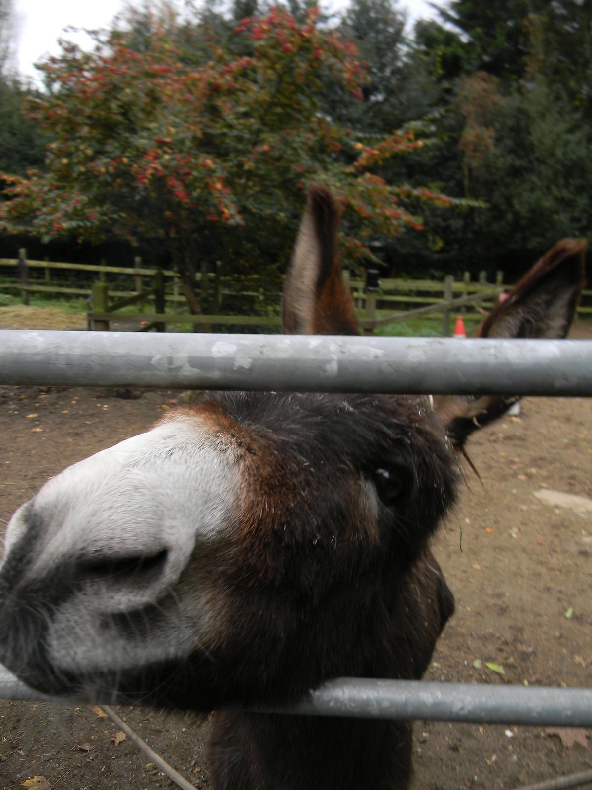 Donkey B at The Donkey (pub) Farnham to Godalming - Wednesday Walk