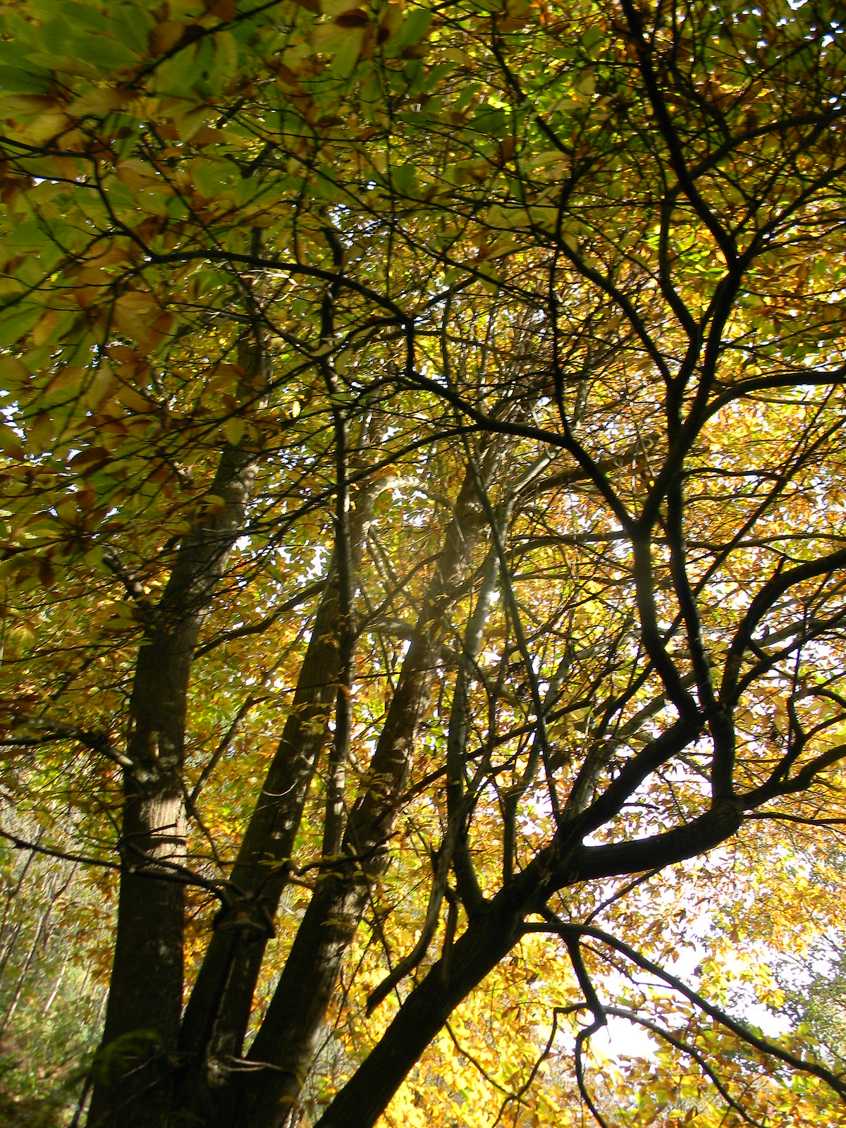 Autumn bonanza Farnham to Godalming Wednesday Walk