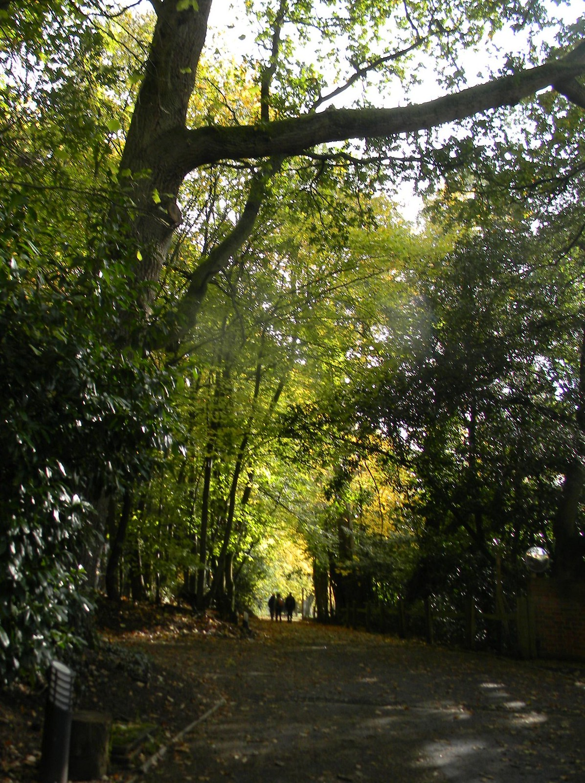 disappearing walkers Farnham to Godalming Wednesday Walk