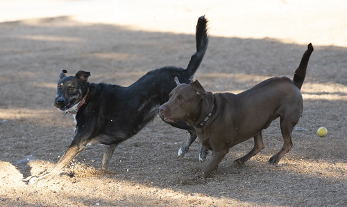 pv_dog_park_20191107_144 | by Dagny Gromer