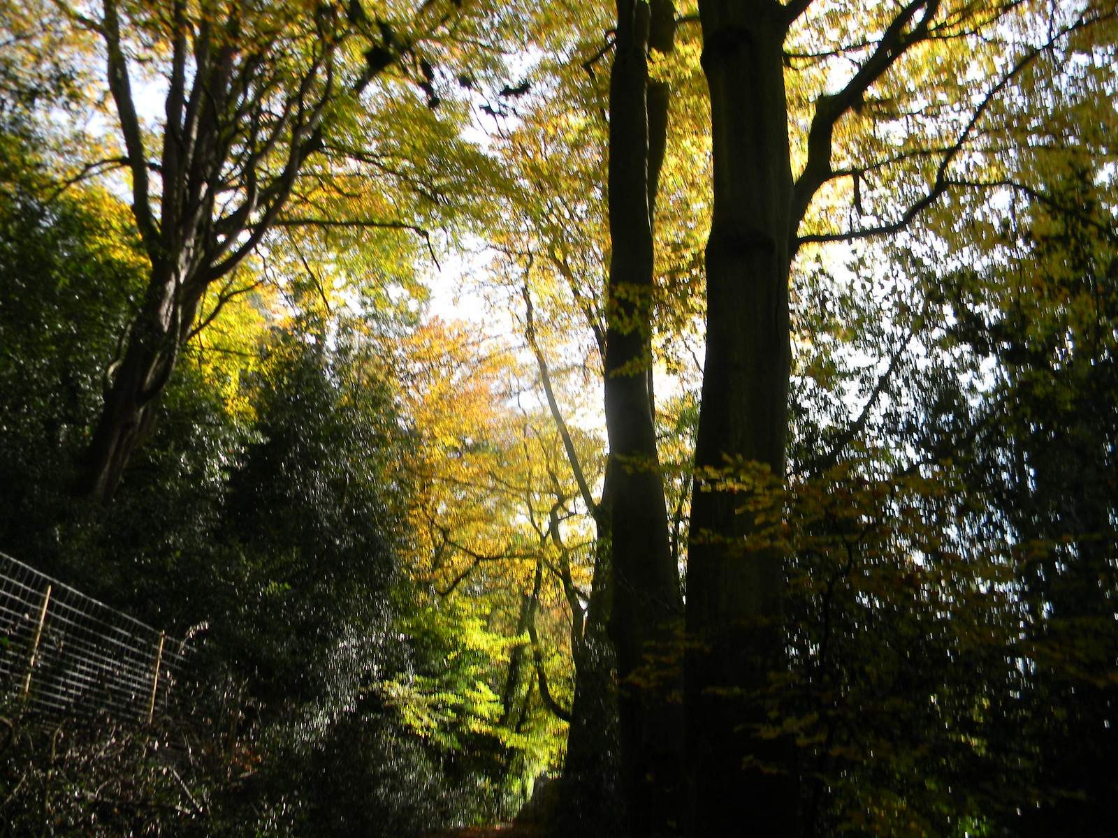 Autumn leaves Farnham to Godalming Wednesday Walk