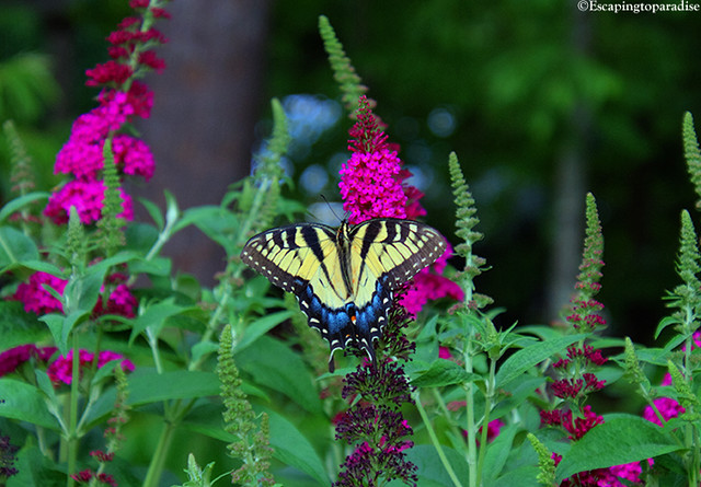 Butterfly+1_1110_TCW2
