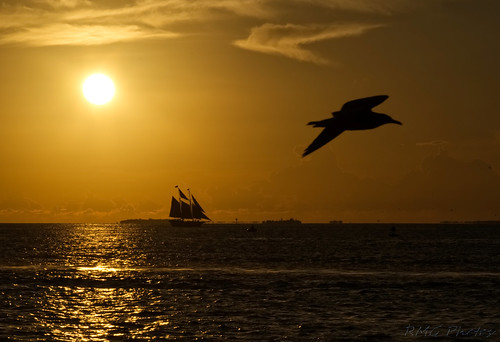 philadelphiaphotographer findingtheshot beyondtheview timing keywest nikond750 nikon nikkor lighting sunset shadows silouhette florida dreamscape saffron saffronsky sailboats
