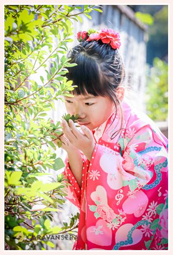 七五三 7歳の女の子 ピンクのお着物でコーデ