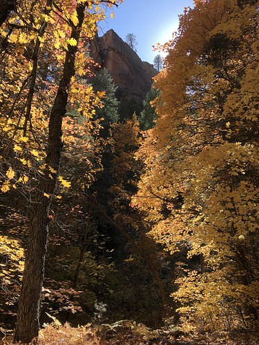 arizona autumn fallcolors leaves colorful canyon westforkoakcreek sedona coconinonationalforest sunlight glowing redrocks wilderness outdoors adventure hiking nature southwest az usa wild iphone8plus zoniedude1