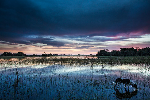 Pantanal da Nhecolândia, MS