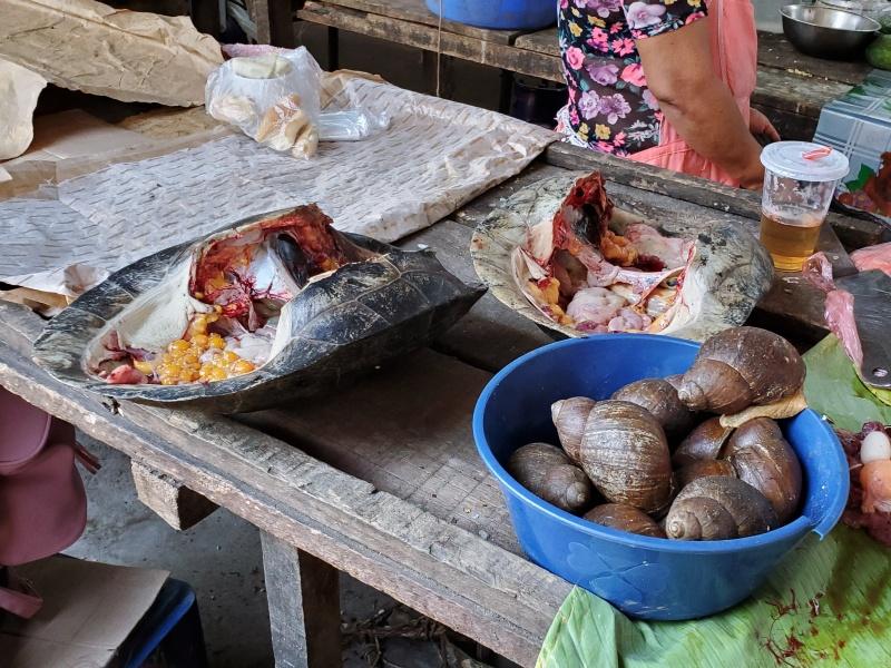 Belen Market Iquitos turtles