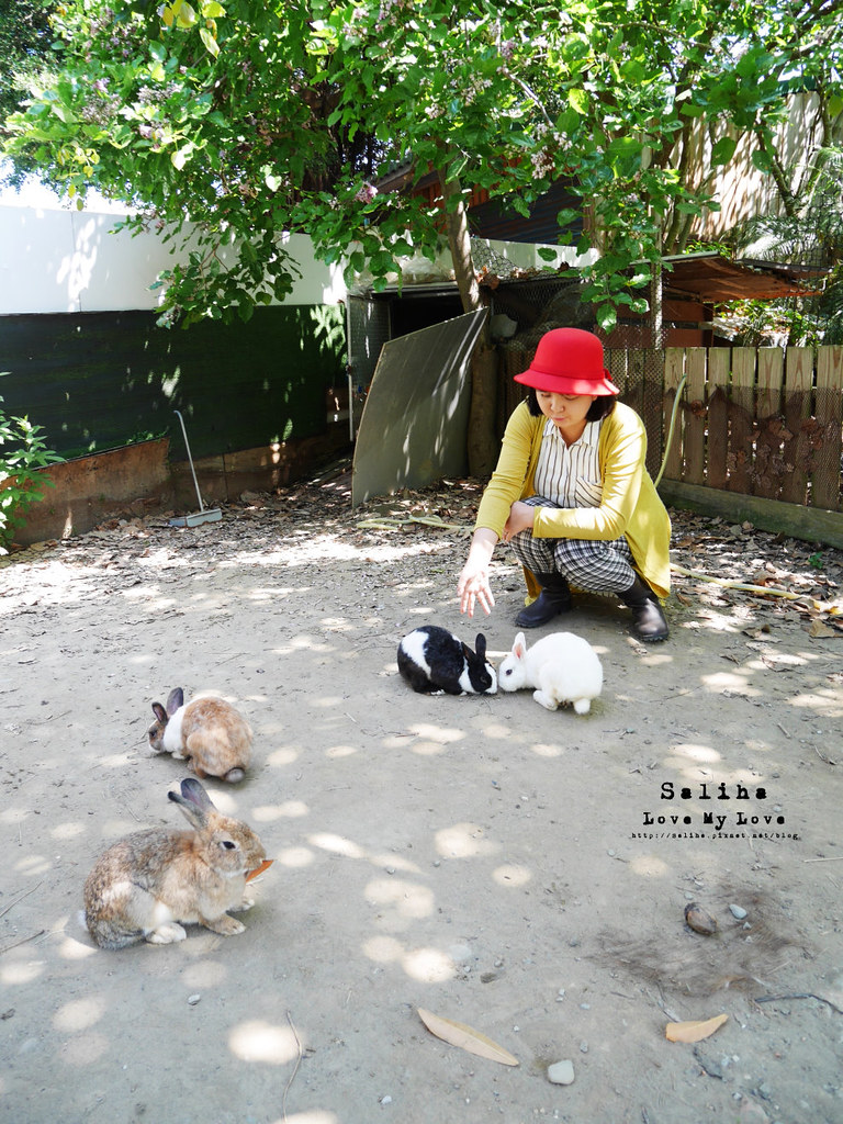 新北八里十三行博物館附近親子景點tohouse兔子餐廳