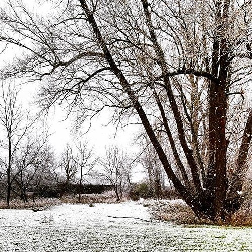 First snow! #winter #snow #nature #wny #Buffalo #the716