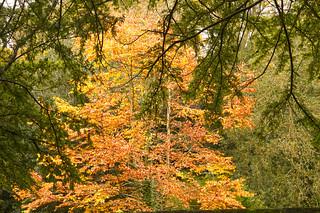 Autumn hues in Jesmond Dene   IMG_0344