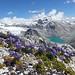 Bhutan19_1513 Wild Flowers