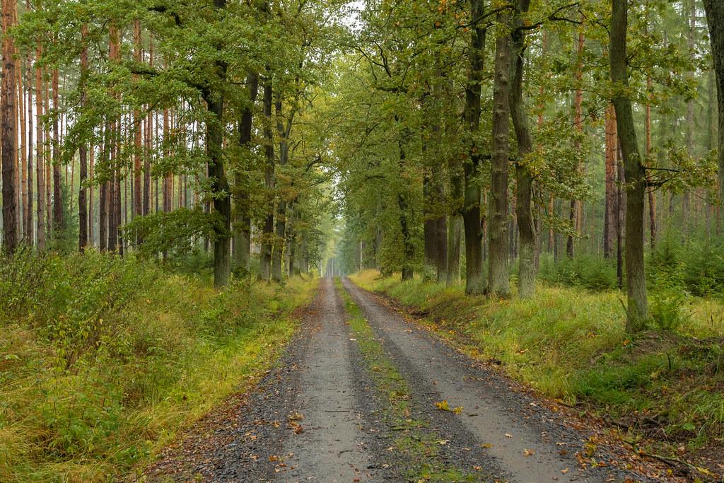 Unser Wald  (6)