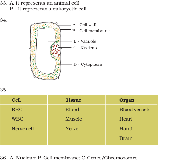 NCERT Exemplar Class 8 Science Unit 8 Cell—Structure And ...