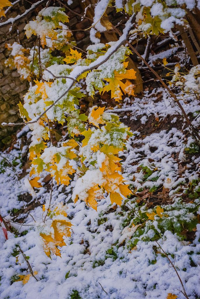 утро в октябре. ранняя осень. ранний снег