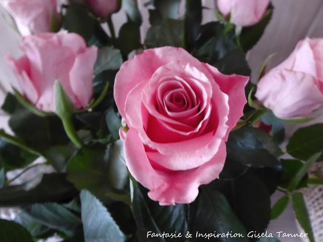 Friday Flower Day - Rosen