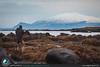 Zampatti e la foca