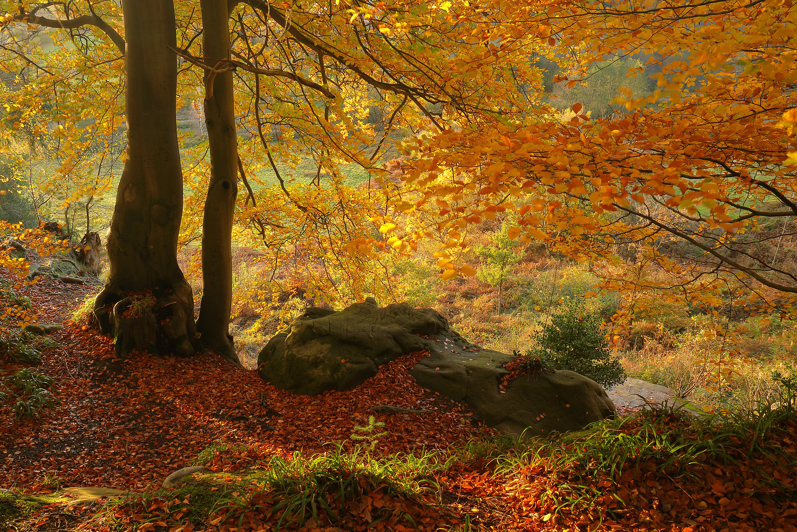 Autumn Woodland in November