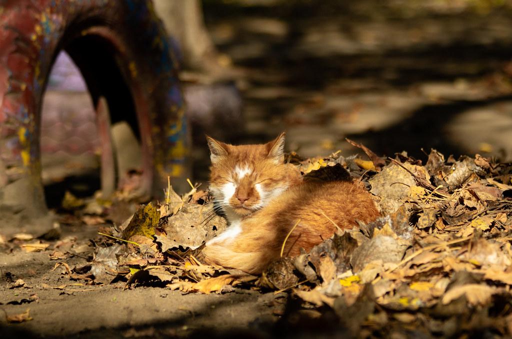 sun_cat