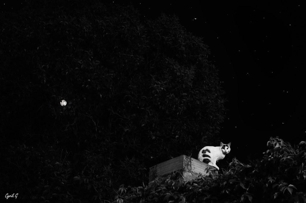 La nuit du chat 49033705778_1b3079c474_b
