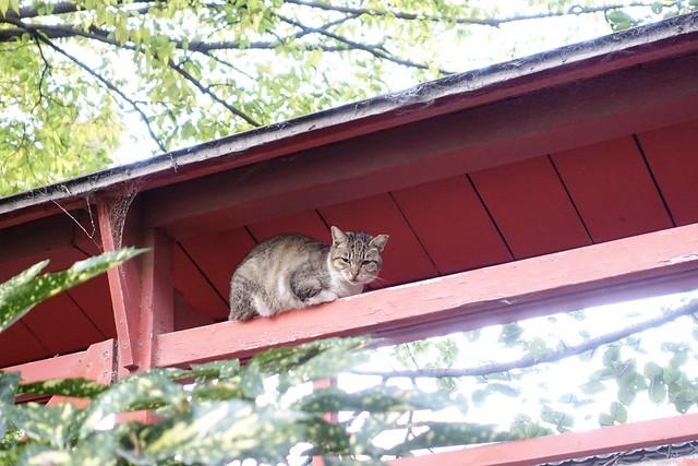 Today's Cat@2019-11-08