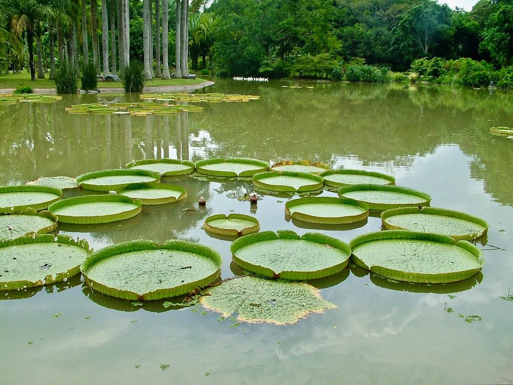 Botanic Gardens, Menglun, Xishuangbanna, Yunnan, Southwest China, Asia