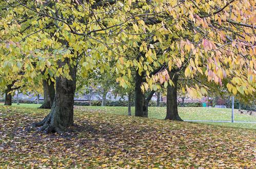 Autumn leaves Farrand Road, Hedon.