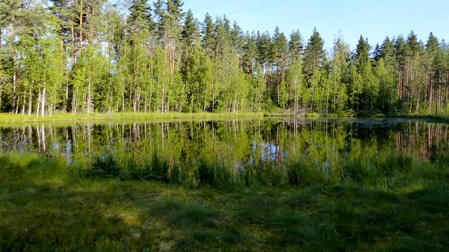 Lake Juurikkalampi (Petäjävesi, 20190805)