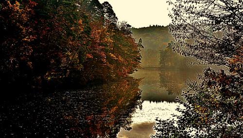 Germany, Herbst rund um den Bärensee bei Stuttgart (Textur), 76785/12077