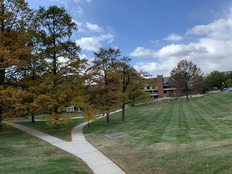 Image of trees surrounding a building on a campus