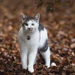 So, 03.11.19 - 19:09 - Inquisitive cat  Nachbars Katze auf Waldspaziergang  Katze, Portrait  Olympus Zuiko Digital ED 150mm, F2.0