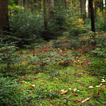 So, 03.11.19 - 17:48 - Fairy ring  Voigtländer 17mm F0.95 Wide open Offenblende Märchenwald