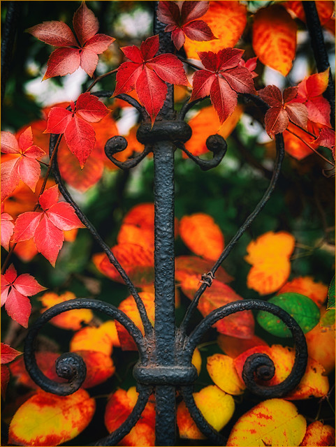 (Whats the Story) Autumn Glory!