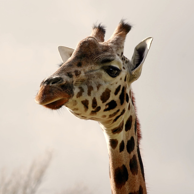 fancy a bite to eat Chester zoo today. so as you know they now at close at 4.00 pm