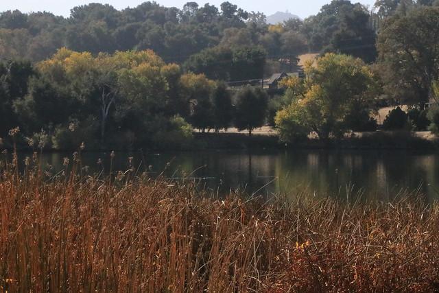 A bit of a morning walk around @visitatascadero @slocal @visitcalifornia this morning looking at ducks, birds, #fall leaves. #unfiltered with @canonusa 80D #canon EF 24-105mm   #teamcanon #smugmug #atascadero #lake #birds #ducks #reflection #autumn #sanlu
